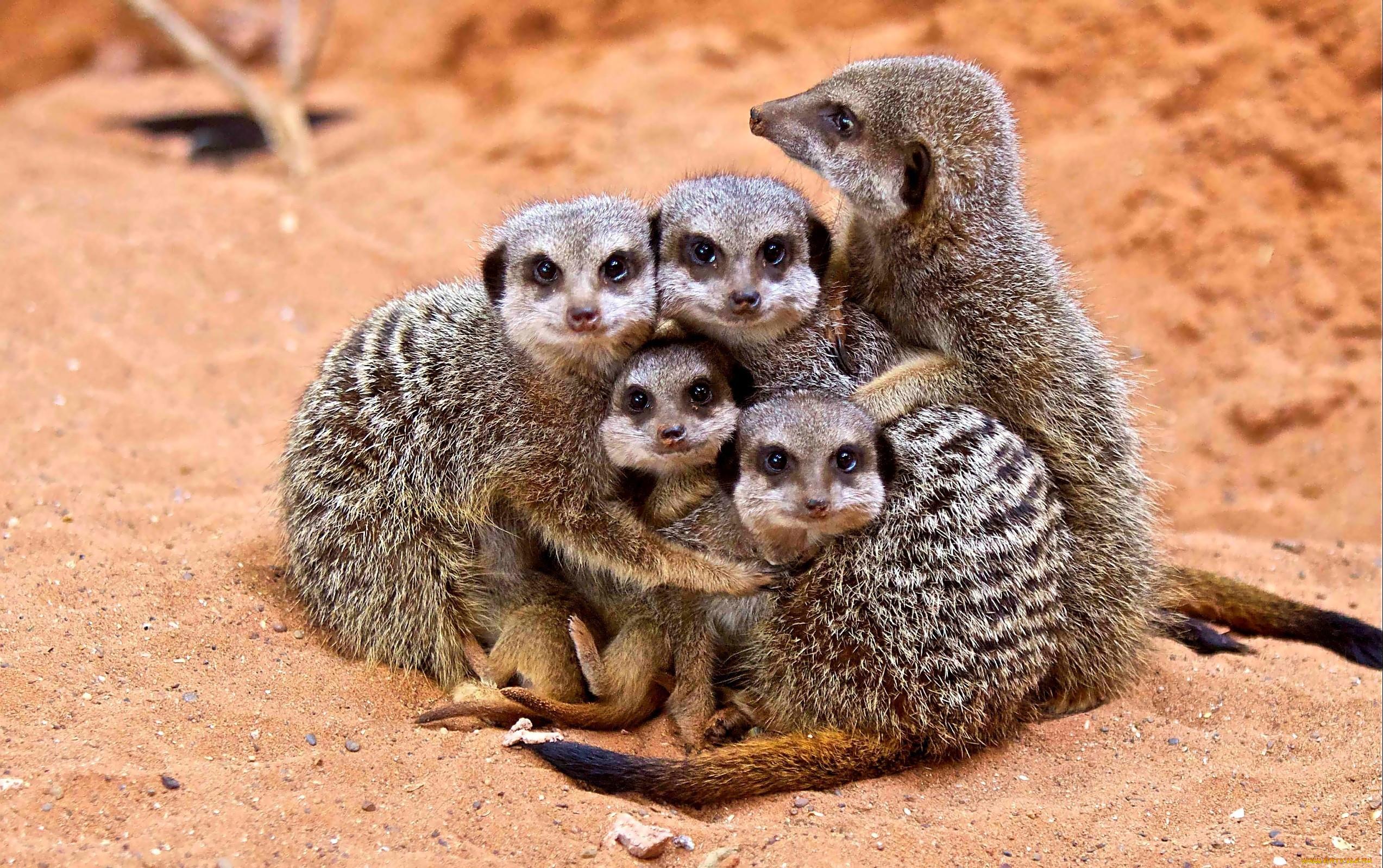 Картинки семья прикольные животные